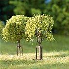 70950 Auhagen - Junge Bäume, 10 Stück - HO / TT / N