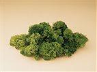76651 Auhagen - Islandmoos - grün, 50 g