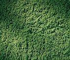 76666 Auhagen - Rollrasen hellgrün 15 x 25 cm