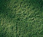 76669 Auhagen - Rollrasen laubgrün 15 x 25 cm