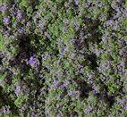 76931 Auhagen - Blumenmatte violett 9,5 x 25 cm