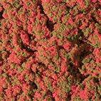 76932 Auhagen - Blumenmatte rot 9,5 x 25 cm