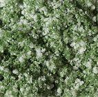 76933 Auhagen - Blumenmatte weiß 9,5 x 25 cm